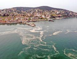 Lendir Tebal Cemari Permukaan Laut Marmara, Industri Perikanan Turki Terhambat