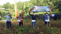 Produksi Kedelai di Gunungkidul Meningkat, Petani Didorong Kembali Menanam