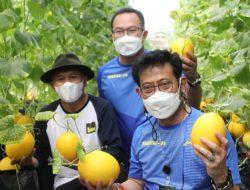 Rektor IPB University Sambut Dua Menteri Sambil Panen Melon Bersama