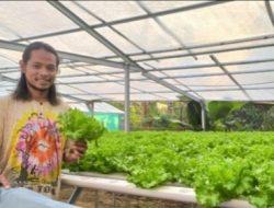 Alumni Sastra Arab Sukses Bertani Hidroponik, Belajar dari Youtube hingga Jual Motor