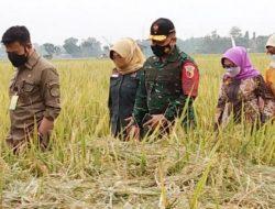 Petani Jombang Rasakan Manfaat Asuransi Pertanian