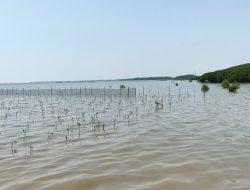 Jaga Ekosistem Pesisir, KKP Tanam 43.500 Bibit Mangrove di Pasuruan