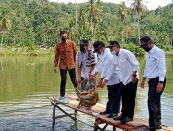 Budidaya Ikan Air Tawar Bergeliat di Pasaman, Nilai Produksi Capai Rp 1 Triliun