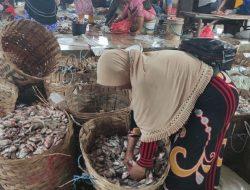 Musim Panen Raya, Pasokan Ikan di Lamongan Melimpah