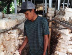 Petani Milenial Ini Petik Cuan dari Bisnis Jamur Tiram di Halaman Rumahnya