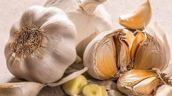 Pestisida Organik Bawang Putih, Alternatif Basmi Hama Tanaman