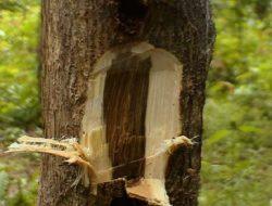Lima Tanaman Pohon yang Bisa Mengeluarkan Aroma Khas, Apa Saja?