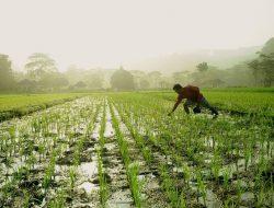 Mengenal Hari Krida Pertanian 21 Juni dan Perayaannya