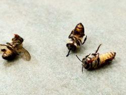 Ini yang Akan Terjadi Jika Tak Ada Lebah di Muka Bumi