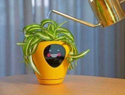 Ini Fakta Tentang Lua, Pot Pintar yang Mampu Mengekspresikan Perasaan Tanaman