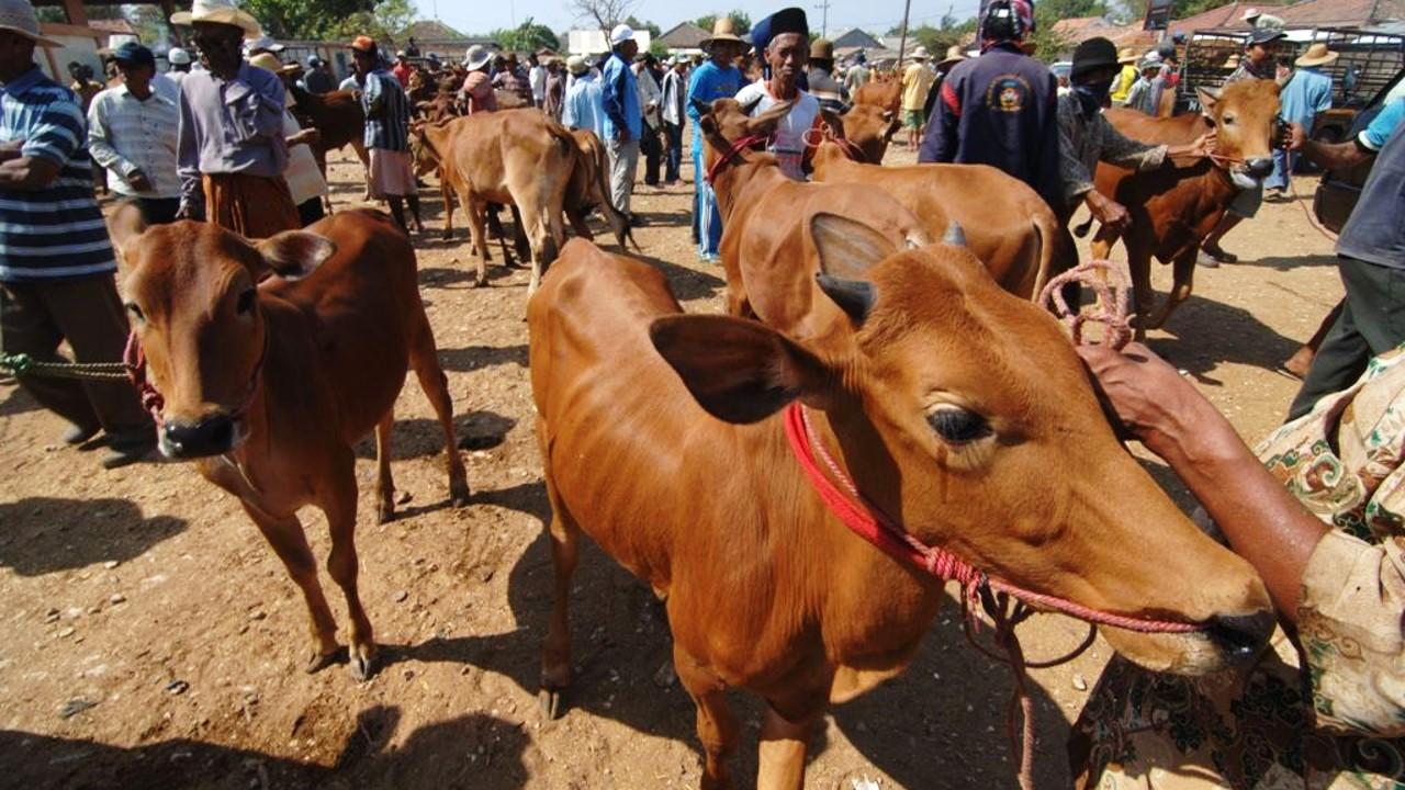 pasar penjualan sapi