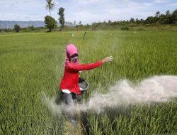 Hore! Kementan Catat Profesi Petani, Peternak dan Pekebun Tumbuh 2 Persen