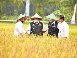 Dinilai Berhasil, Pengamat Pertanian Akui Kinerja Kementan