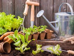 Dompet Anti Bocor, Inilah Tips Low Budget Untuk Kebunmu