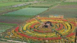 Gerbas Tani Lumajang, Belanja Sayuran Sambil Berwisata