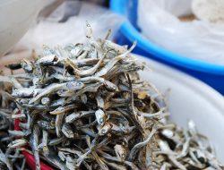 Kenali 3 Jenis Ikan Teri Asal Indonesia yang Sering Dikonsumsi