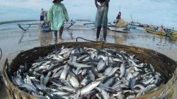 Negara Tropis yang Mengandalkan Hasil Perikanan Tangkap Terancam Kekurangan Gizi