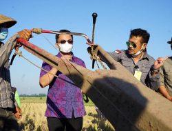 Turut Panen Padi di Bandung, Mentan SYL Jamin Ketersediaan Stok Beras