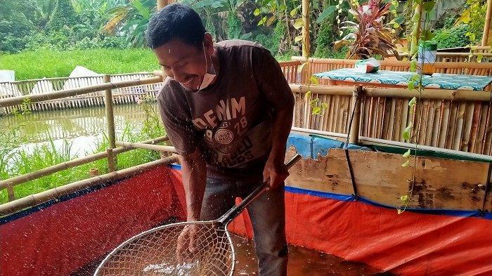 Mulyadi memelihara ikan di Sungai Puri Pamulang. (Sumber: Tribunnews)