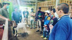 Pelatihan di peternakan 78 Farm