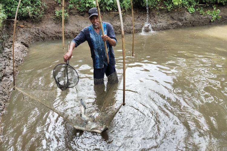 Pembudidaya ikan nila black prima di Tasikmalaya