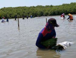 Rehabilitasi Kawasan Mangrove, Upaya Pemulihan Ekonomi di Kawasan Pesisir