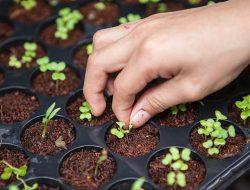 Ingin Menanam Sayuran di Rumah? Tanaman Ini Patut Dicoba