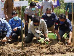 Dinilai Berpotensi, Kementan Garap Seribu Hektare Lahan Porang di Pangkep