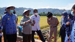 Menteri Pertanian Syahrul Yasin Limpo berada di Sawah