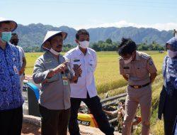 Jangan Biarkan Lahan Nganggur Lama, Solusi Kementan Jaga Stok Beras