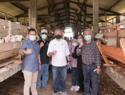Peternak Milenial Jabar Siap Ekspor Domba ke Malaysia