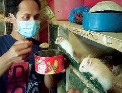 Agus Beternak Hamster karena Lucu, Modal Awal Rp2 Juta