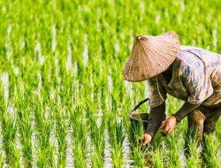 Tingkatkan Kualitas SDM, Pelatihan 1 Juta Petani Siap Digelar