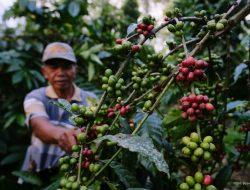 Bakri Sukses Bertani Kopi hingga Bangun Peternakan Kambing