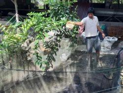 Pembudidaya Ikan Ini Buat Pakan Mandiri Hingga 30 Kg Sehari dengan Alat Sederhana