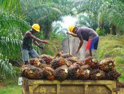 Targetkan Ekspor Perkebunan Tembus Rp1.040 Triliun, Ini Strategi Kementan