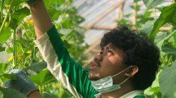 Happy Tani Dau Malang, Juragan Sayur dan Buah Sehat Bebas Pestisida
