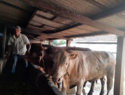 DPKH Kabupaten Malang Dukung Program PEN, Bantuan Ternak Segera Disalurkan