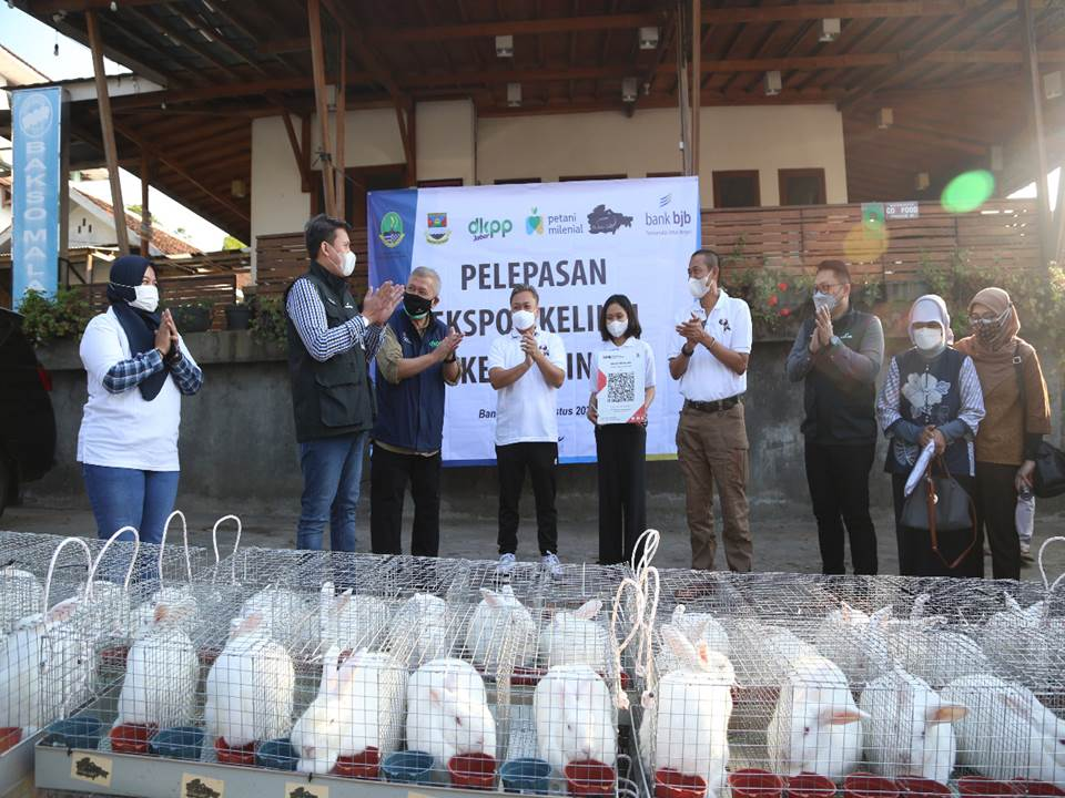 Pelepasan ekspor kelinci hias ke Filipina