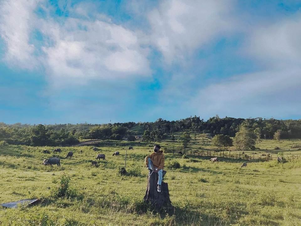Bukit Kebo, Peternakan Kerbau di Balikpapan Ramai Dikunjungi dan Dijadikan sebagai Tempat Berjemur hingga Berkemah