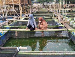 Budidaya Ikan di Keramba Apung, Warga di Periuk Raup Omzet Jutaan Rupiah