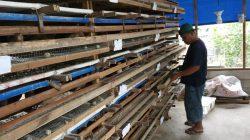 Bantu Ekonomi Warga dengan Libatkan Ibu Rumah Tangga Beternak Puyuh