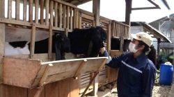 Fera peternak kambing