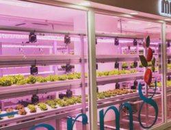 Keren, Korea Selatan Ubah Stasiun Kereta Bawah Tanah Jadi Kebun Sayur Modern