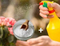 Mengulik Manfaat Baking Soda untuk Tanaman, Patut Dicoba