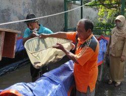 Antusias Guru SD di Kediri Membantu di Tengah Pandemi, Bagi-bagi Ikan Lele Hasil Budidaya