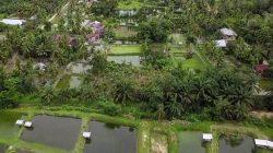 Desa Wisata Koto Mesjid di Kabupaten Kampar