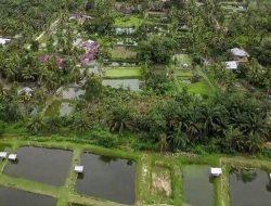 Menengok Kampung yang Dipenuhi dengan Kolam Ikan Patin di Riau