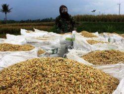 Jaga Harga Gabah, Kementan: Ini Penting untuk Pendapatan Petani