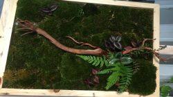 Hiasan Dinding Buatan Mahasiswa UGM Ini Terbuat dari Lumut Hidup